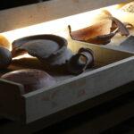Keramiksammlung Tel Masos / Khirbet el-Meschasch (Foto: Thomas Hartmann, Universitätsbibliothek Mainz)