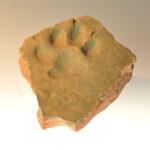 Römischer Ziegel aus Mainz mit Abdruck einer Hundepfote (Foto: Irene Bell, Institut für Altertumswissenschaften)